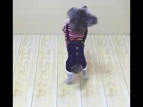 Quần áo cho chó Mã QACC3