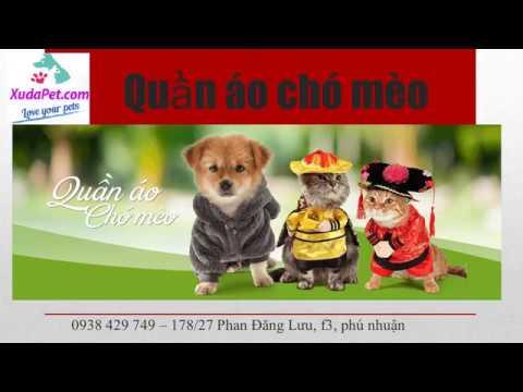 quần áo cho chó tphcm – xudapet.com