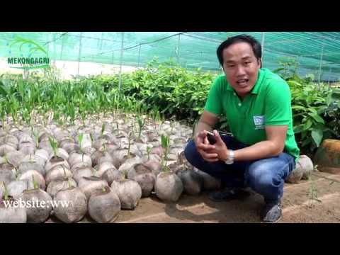 Nơi bán cây giống uy tính tại ĐBSCL (giống cây trồng)