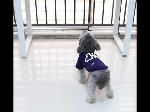 Quần áo cho chó Mã QACC2