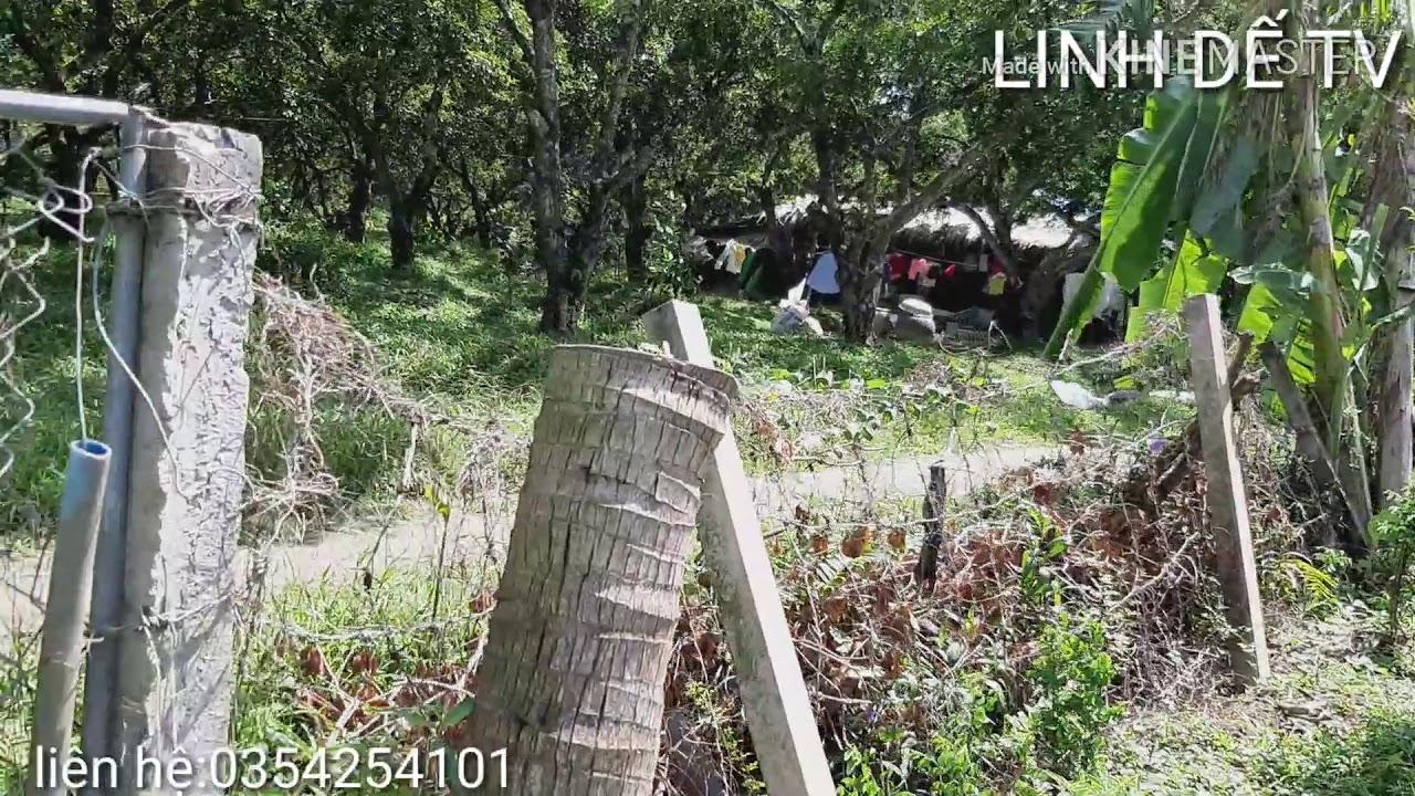 Bán đất vườn cây ăn trái sa pô ở Tiền Giang
