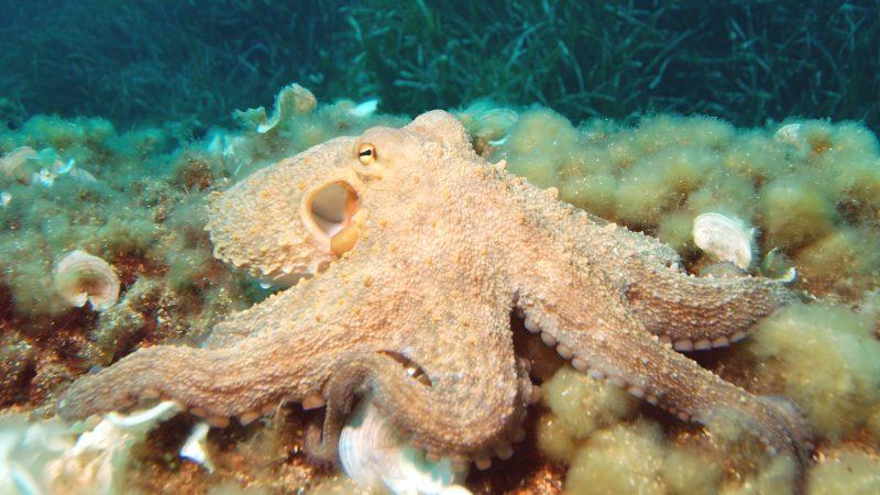 Mơ thấy bạch tuộc đánh con gì trúng lớn?