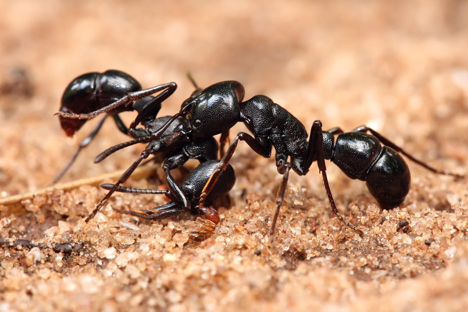Giải mã giấc mơ thấy con kiến