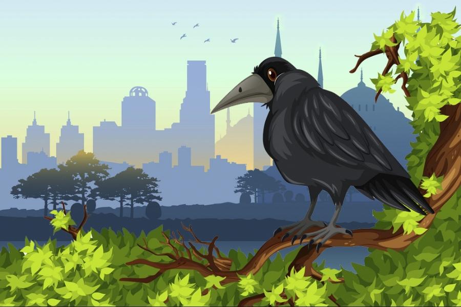 Mơ thấy quạ đen có phải điềm xui xẻo? Nên đánh con gì tốt