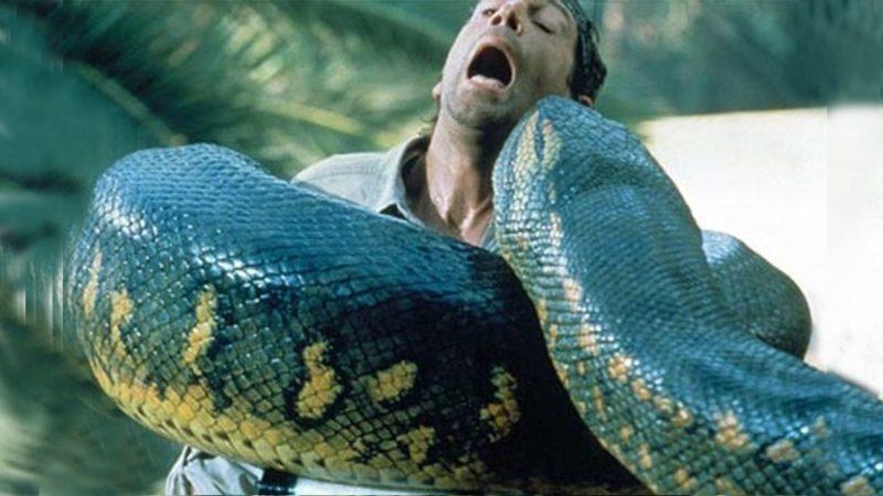 Mơ thấy rắn khổng lồ