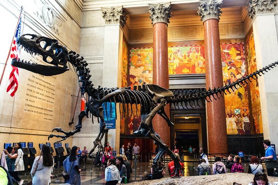 Mơ thấy viện bảo tàng nên chơi con gì trúng lớn?