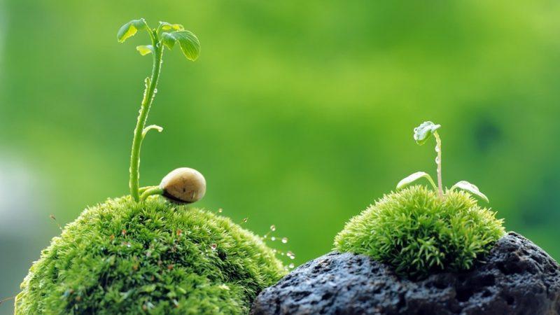 Có ý nghĩa gì khi mơ thấy cây cối? Thông điệp từ cây cối