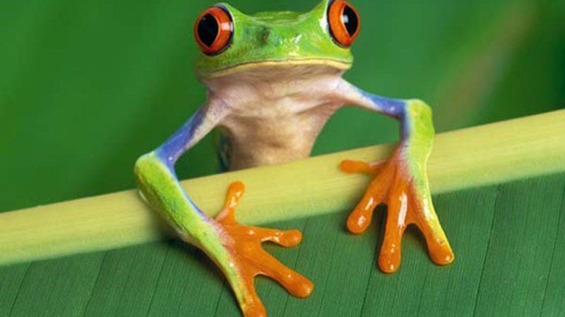 mơ thấy ếch nhái