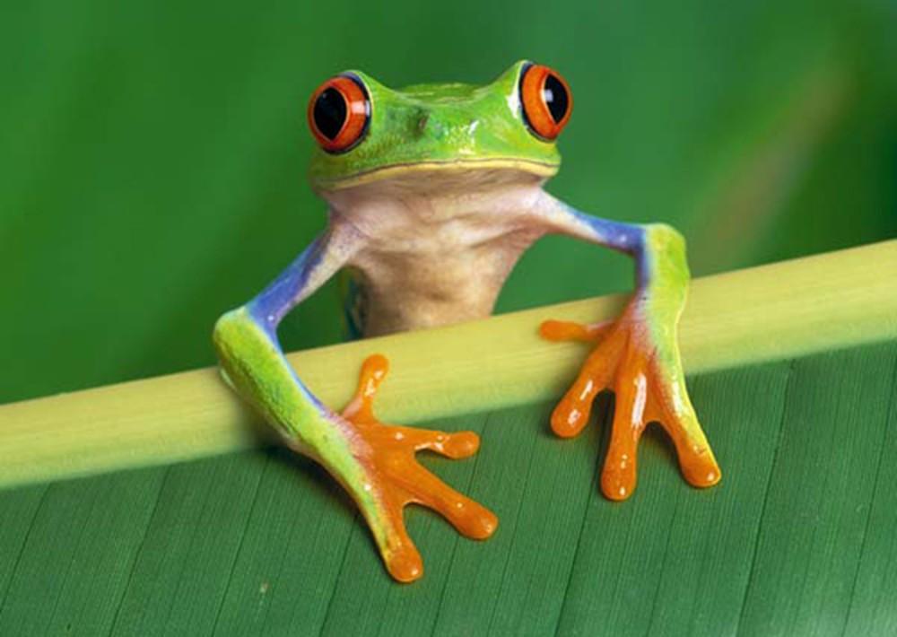 Nằm mơ thấy ếch nhái có ý nghĩa gì? Điềm báo tốt hay xấu?